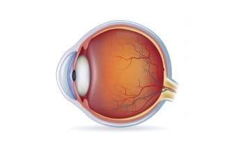Ангиопатия сетчатки глаза у взрослого