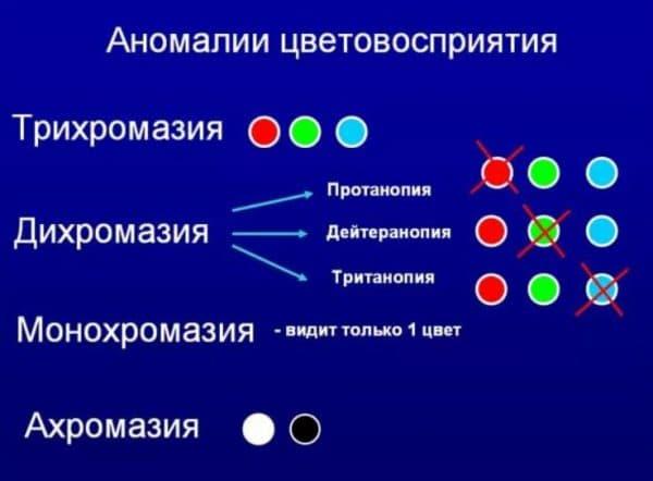 Основные аномалии цветовосприятия