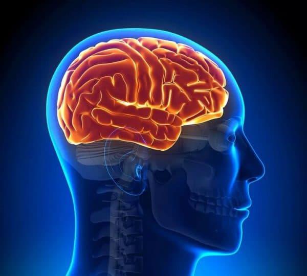 МРТ голвного мозга